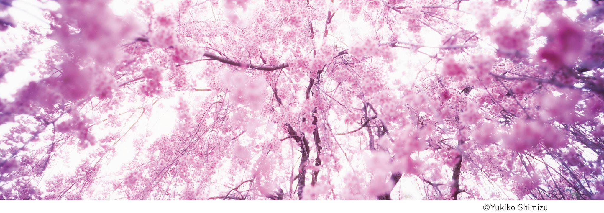 桜×中目黒×アート 中目黒アート花見会「SAKURA Group」展 【今週のおすすめアート】