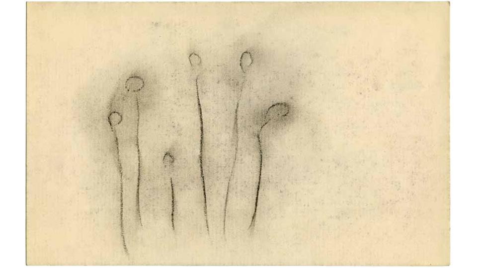 """みずみずしい感性! オノ・ヨーコ展「見えない花」Yoko Ono """"AN INVISIB"""