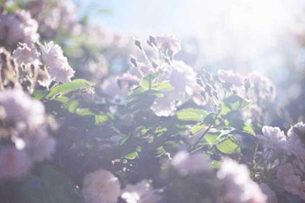 亡き父の死をみつめて「蜷川実花 うつくしい日々」【今週のおすすめアート】