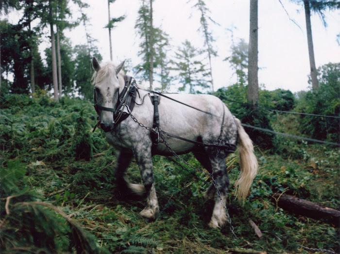 人と動物の関係を見つめる写真家、シャーロット・デュマの映像2本を急遽上映! 【今週のおすすめアート】